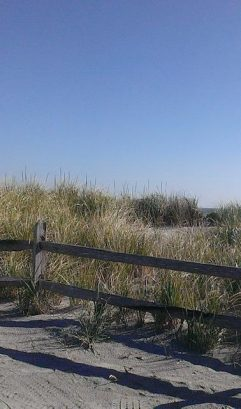 PRESERVING OUR SAND DUNES
