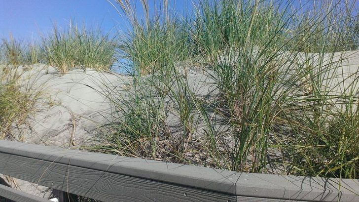 SAND DUNES  ALONG THE BEACH  - THEY ALL ARE UNIQUE
