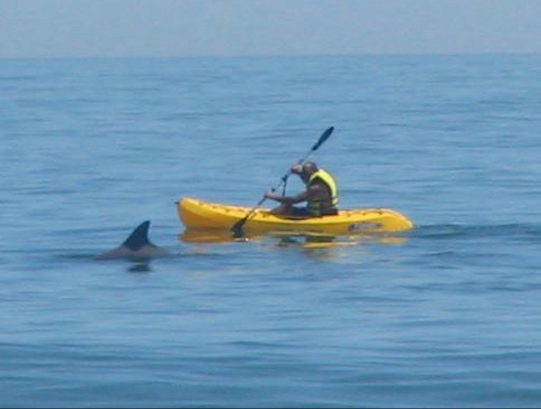 Make your vacation EXCITING!  Kayak with the Dolphins!