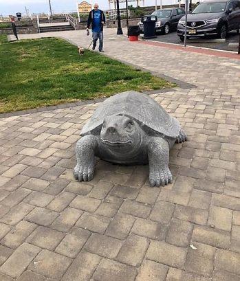 Turtle from Promenade